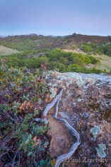 Manzanita and lichen covered rock at twilight, Brothers Ranch
